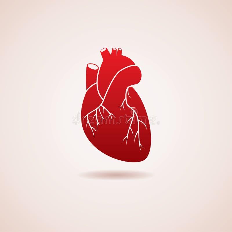Menselijk hartpictogram vector illustratie