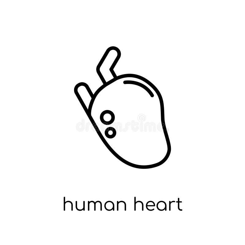 Menselijk hartpictogram In modern vlak lineair vector Menselijk Hart i vector illustratie
