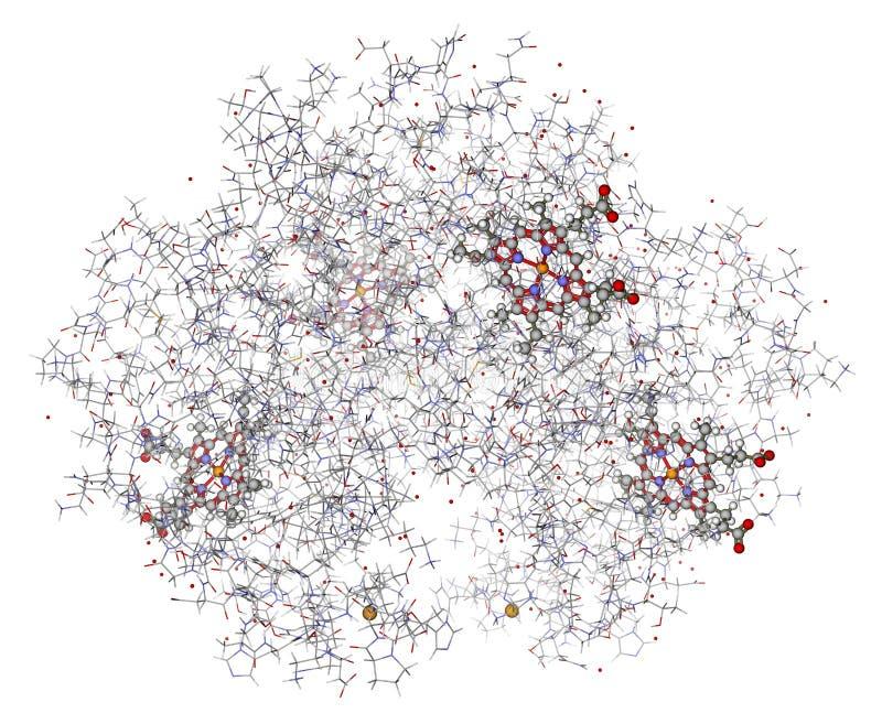 Menselijk hemoglobine 3D model royalty-vrije illustratie