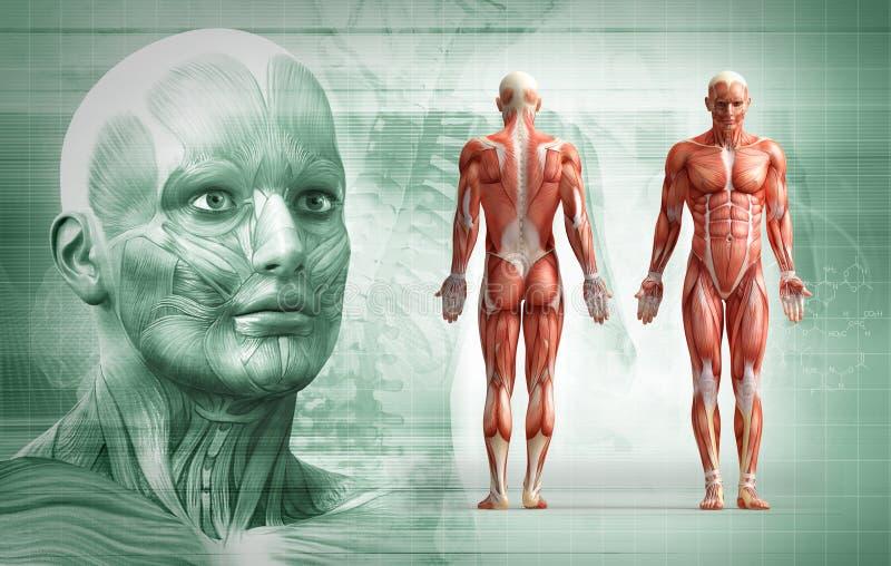 Menselijk lichaam vector illustratie