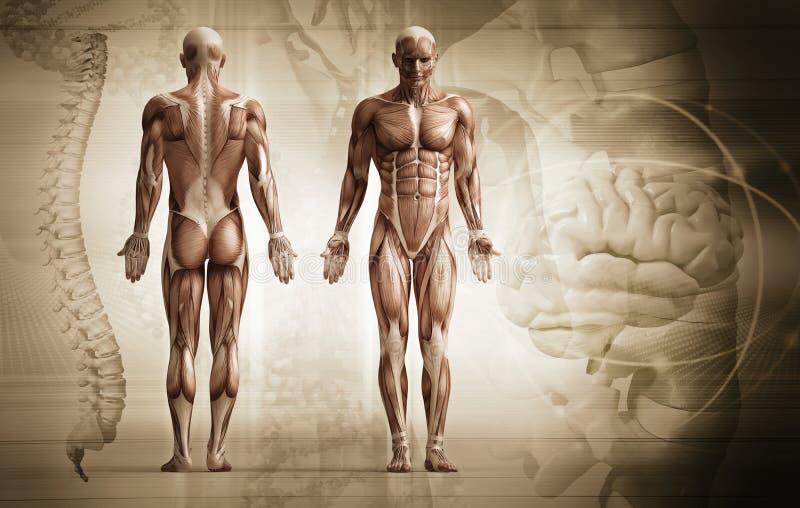 Menselijk lichaam stock illustratie