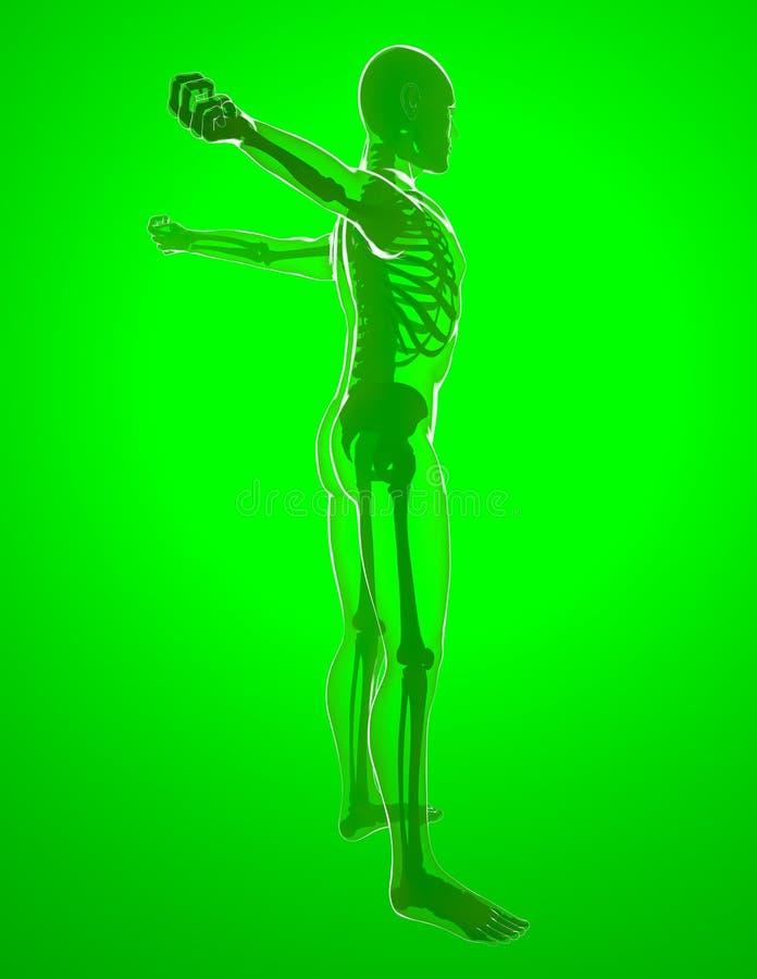 Menselijk lichaam door Röntgenstralen, het uitrekken zich vector illustratie