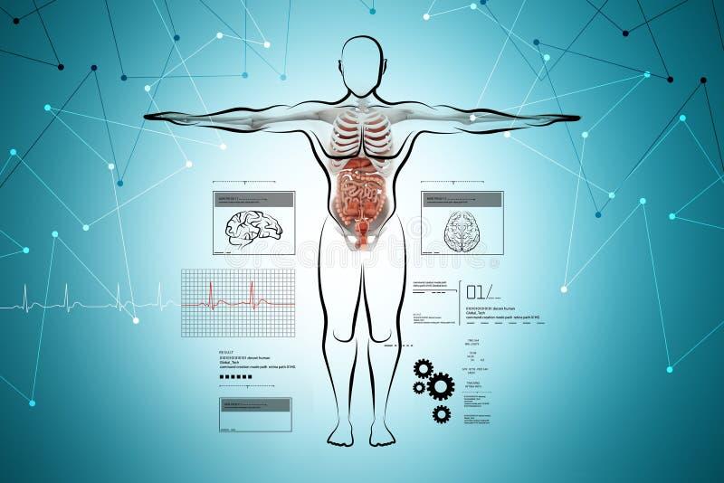 Menselijk lichaam met spijsverteringssysteem royalty-vrije illustratie