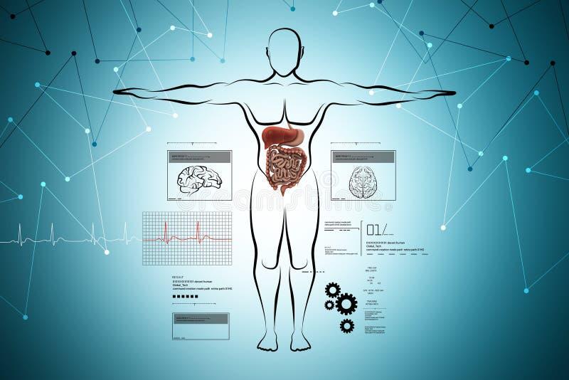 Menselijk lichaam met spijsverteringssysteem stock illustratie