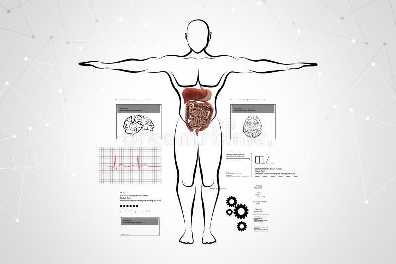 Menselijk lichaam met spijsverteringssysteem vector illustratie