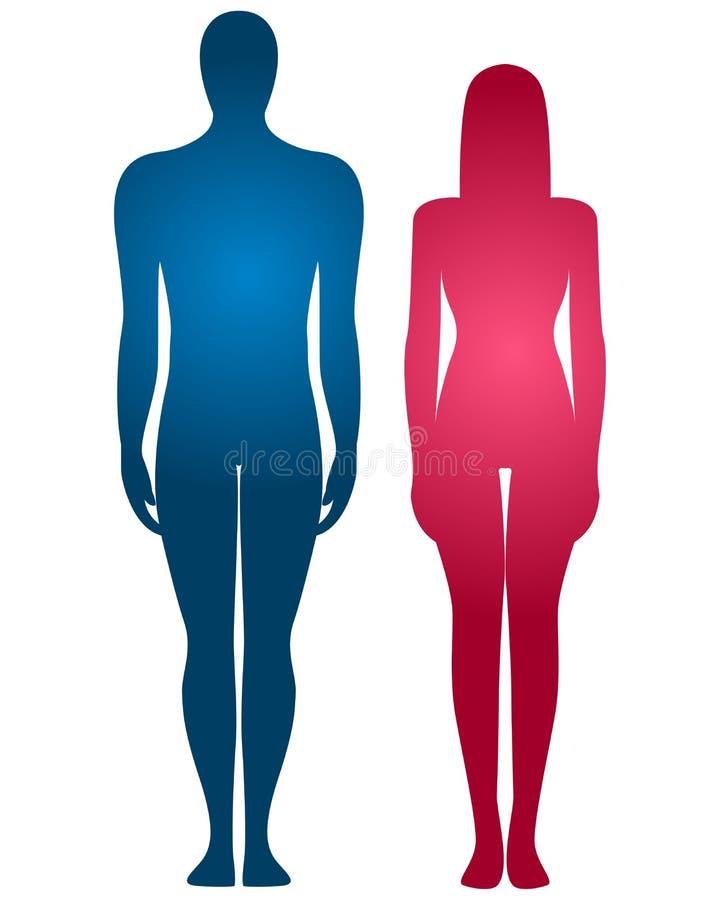 Menselijk lichaamssilhouet royalty-vrije illustratie