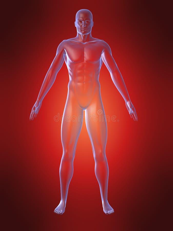 Menselijk lichaamsvorm royalty-vrije illustratie
