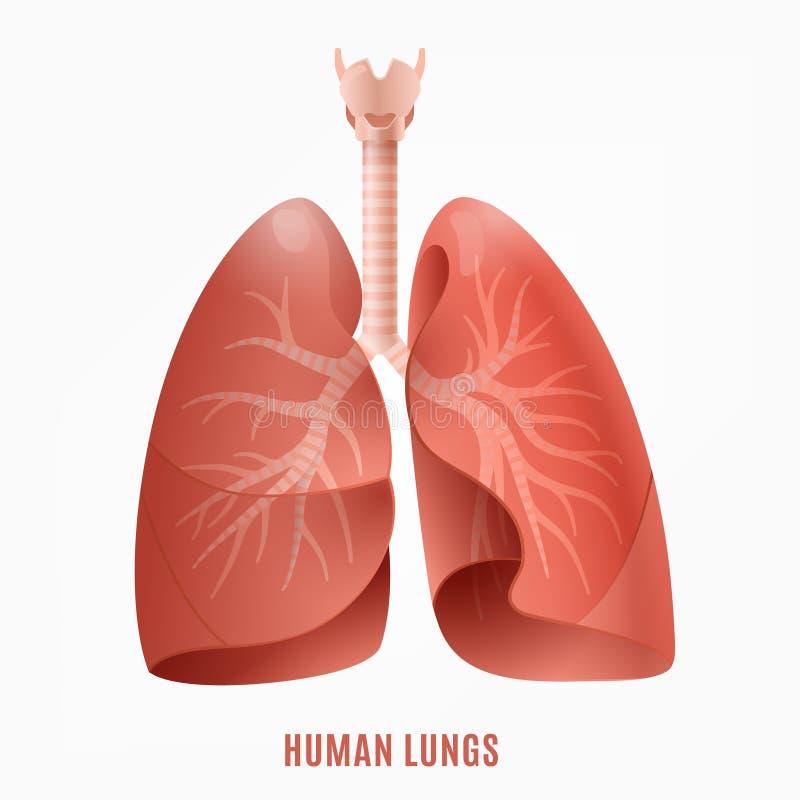 Menselijk Longenpictogram stock illustratie