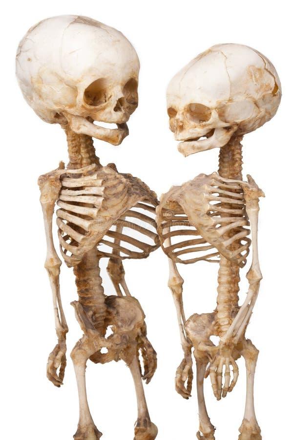 Menselijk medisch skelet twee stock foto