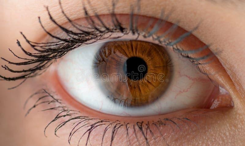 Menselijk oog Macro royalty-vrije stock afbeelding