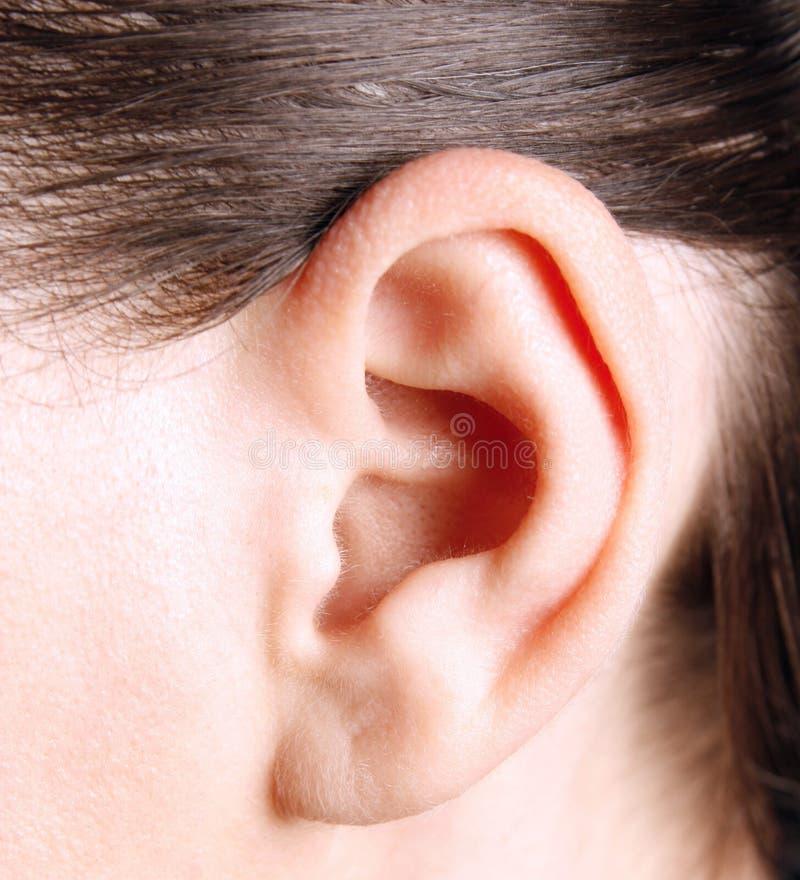 Menselijk oor stock afbeelding