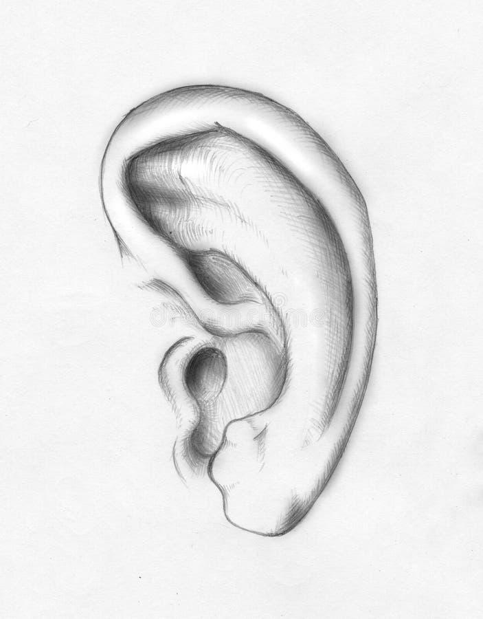 Menselijk oor stock illustratie