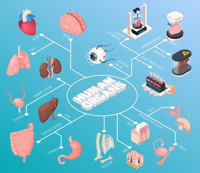 Menselijk Organen Isometrisch Stroomschema royalty-vrije illustratie