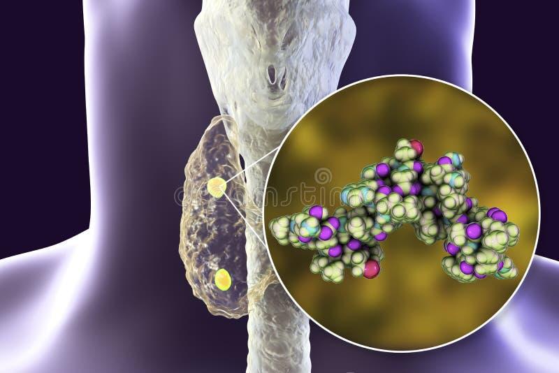 Menselijk parathyroid hormoon stock afbeeldingen