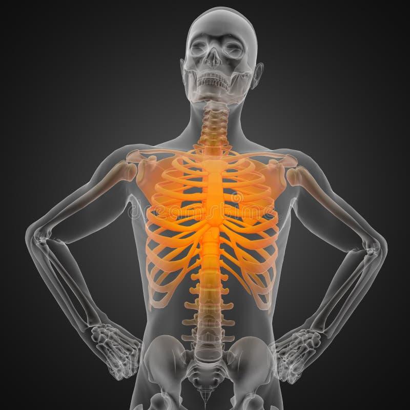 Menselijk radiografieaftasten vector illustratie