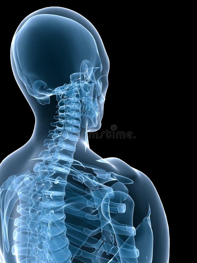 Menselijk x-ray skelet royalty-vrije illustratie