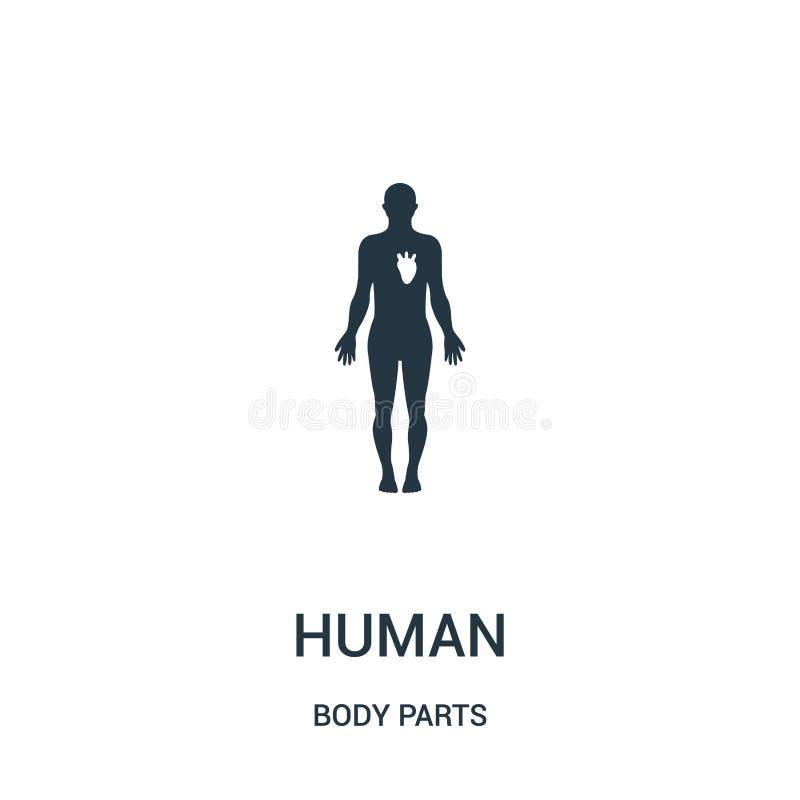 menselijk silhouet met wit beeld van de vector van het hartpictogram van lichaamsdeleninzameling Dun lijn menselijk silhouet met  stock illustratie