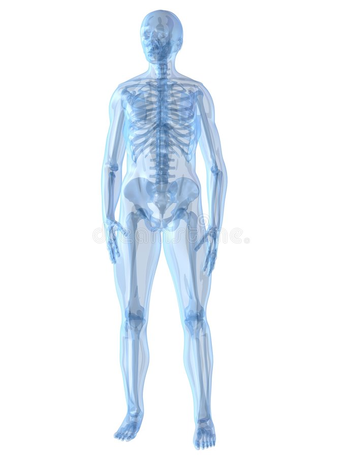 Menselijk skelet vector illustratie