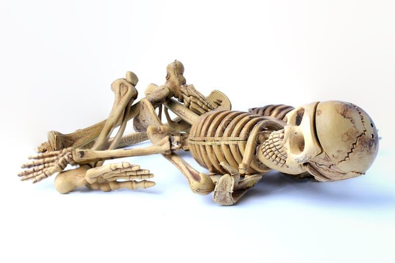 Menselijk skelet dat op witte achtergrond wordt geïsoleerdf stock foto's