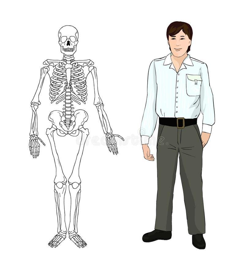 Menselijk skelet Musculoskeletal systeem beenderen Vector royalty-vrije illustratie