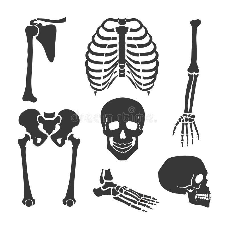 Menselijk skelet Vector zwarte illustratiereeks stock illustratie