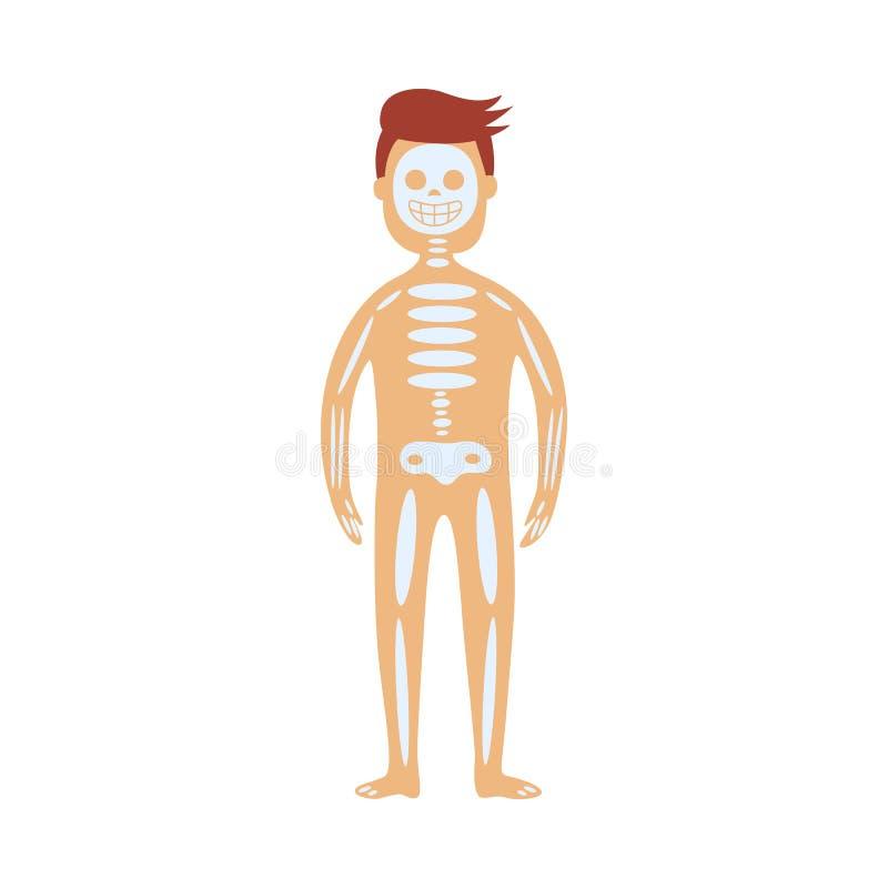 Menselijk skeletachtig systeem in mannelijk lichaam - schematische afbeelding van plaats van schedel, stekel en beenderen stock illustratie