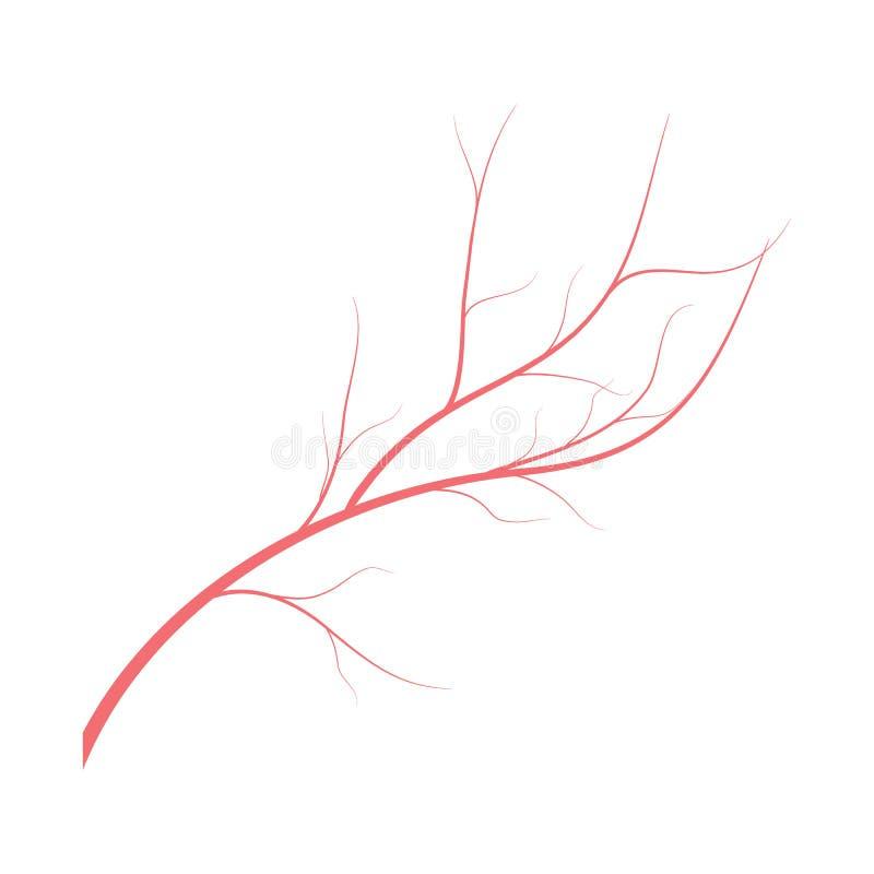 Menselijke aders, rood bloedvatenontwerp op witte backgroun Vector illustratie vector illustratie
