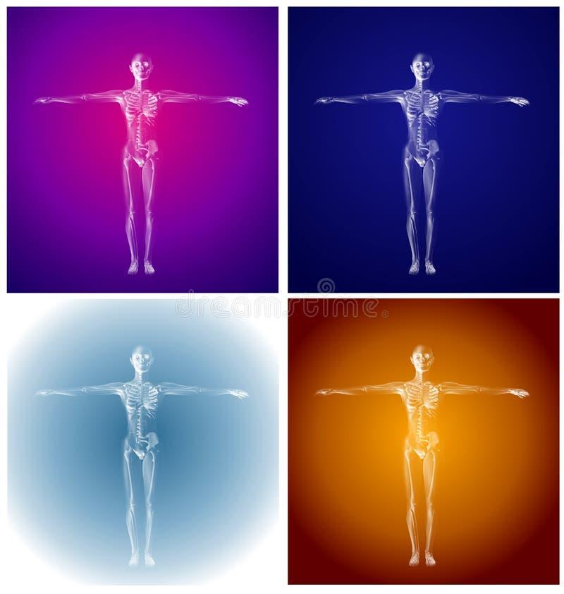 Menselijke Anatomie Gekleurde Skeletten vector illustratie
