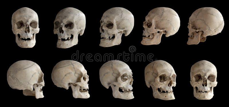 Menselijke anatomie Menselijke schedel Inzameling van omwentelingen van de schedel Schedel bij verschillende hoeken I royalty-vrije stock afbeeldingen