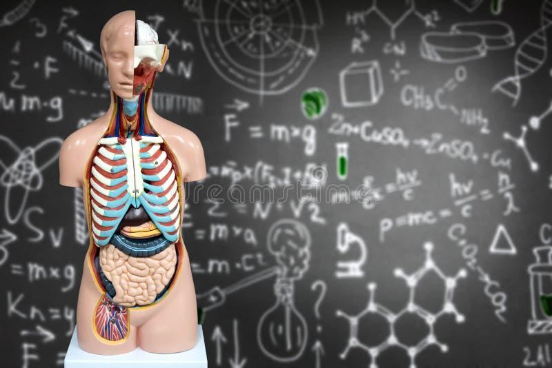 Menselijke anatomieledenpop op de achtergrond van chemische formules royalty-vrije stock foto