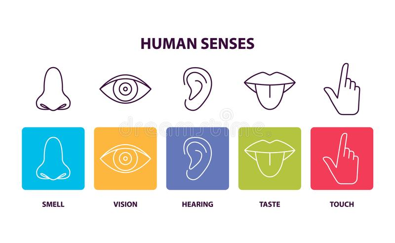 Menselijke Betekenissen Informatieve Affiche met Lichaamsdelen vector illustratie