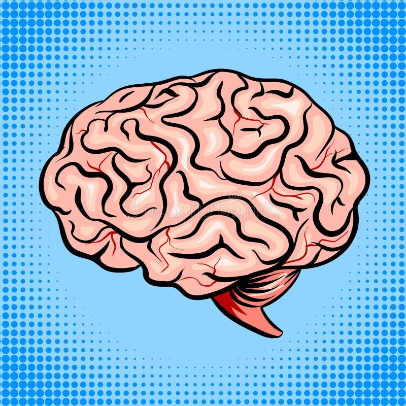 Menselijke de stijl vectorillustratie van het hersenenpop-art royalty-vrije illustratie