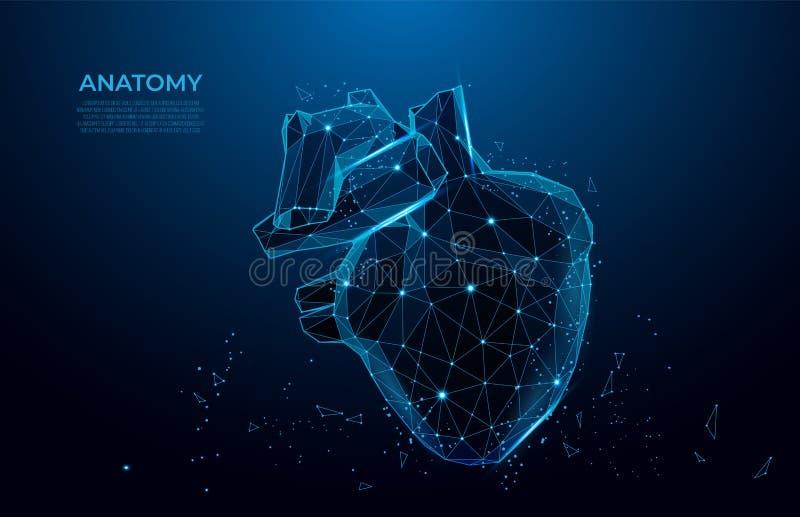 Menselijke de vormlijnen en driehoeken van de hartanatomie Veelhoekig 3D menselijk orgaan op blauwe achtergrond netwerkart. stock illustratie