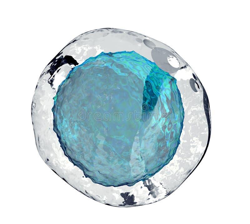 Menselijke eicel op wit vector illustratie