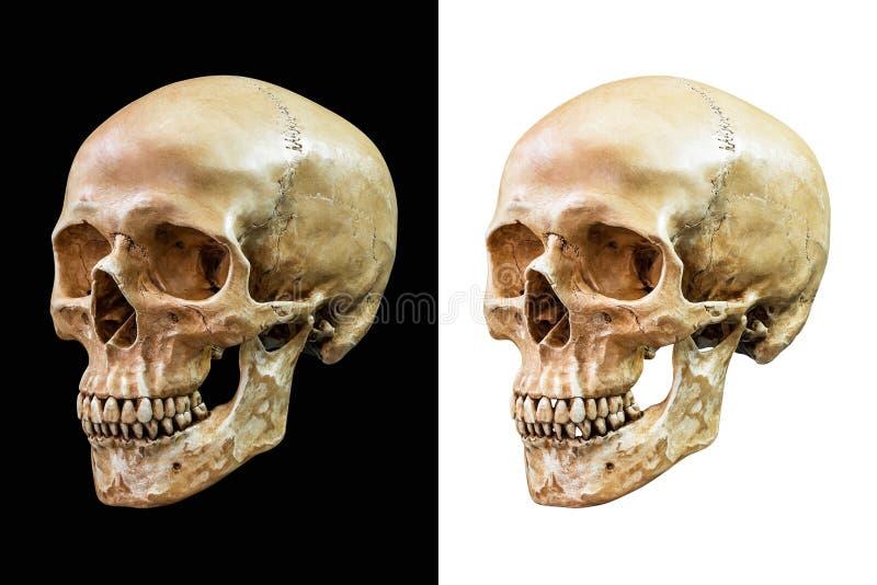 Menselijke geïsoleerdeh schedel royalty-vrije stock foto