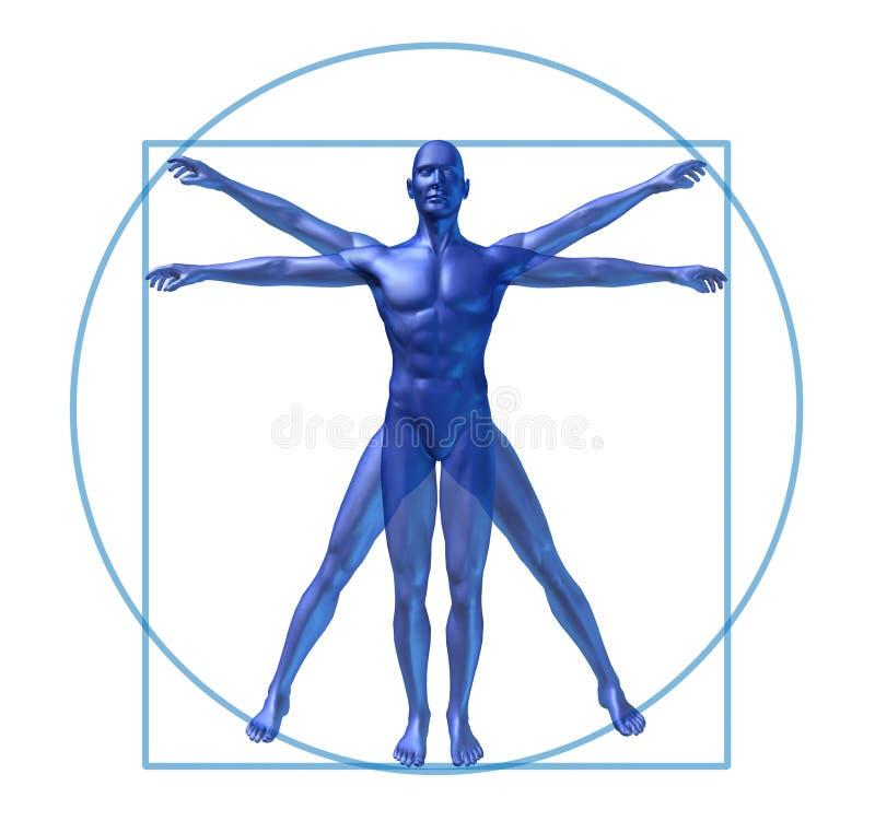 Menselijke geïsoleerden diagram vitruvian mens stock illustratie