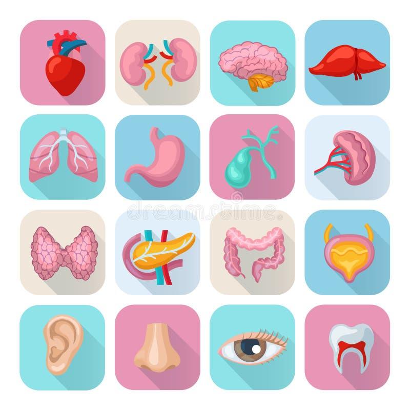 Menselijke geplaatste organen stock illustratie