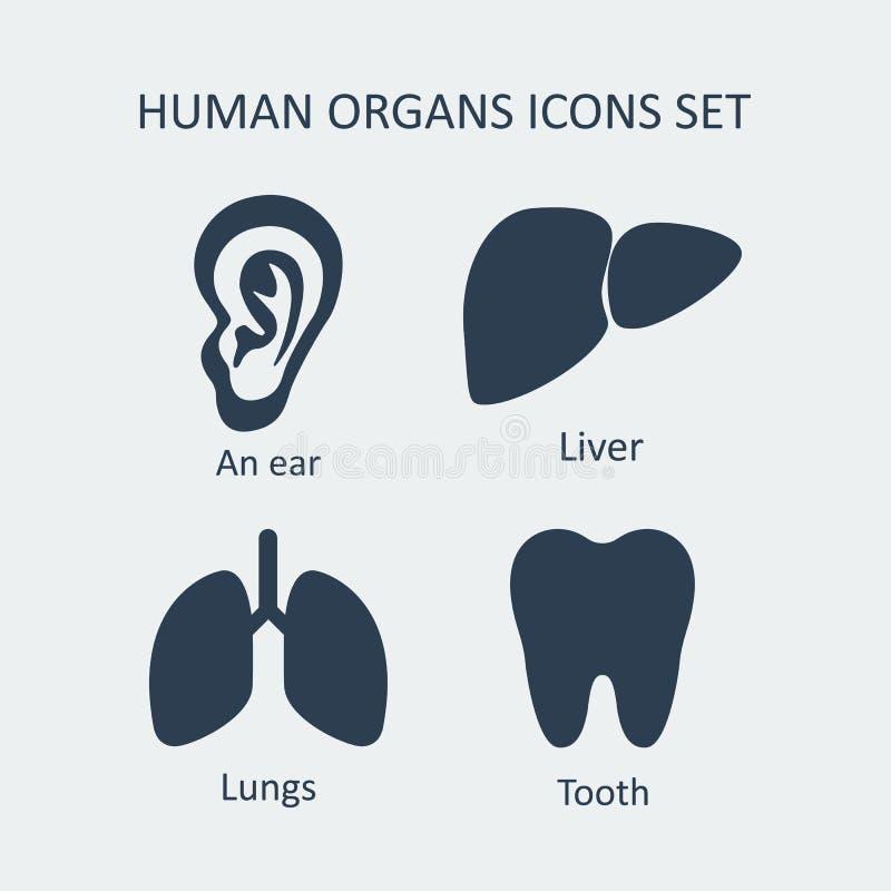 Menselijke Geplaatste Organenpictogrammen Vector stock illustratie