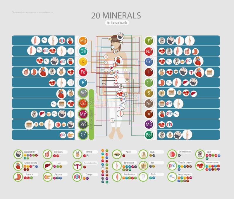 Menselijke gezondheden en mineralen De invloed van micro-elementen op menselijke gezondheden en individuele organen royalty-vrije illustratie