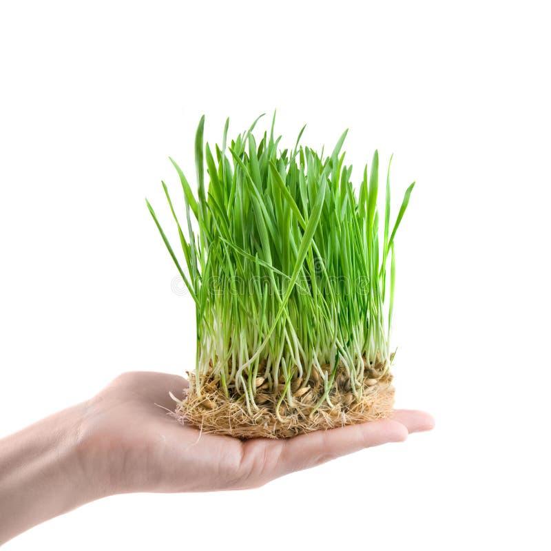 Menselijke hand die groen gras houdt royalty-vrije stock afbeeldingen