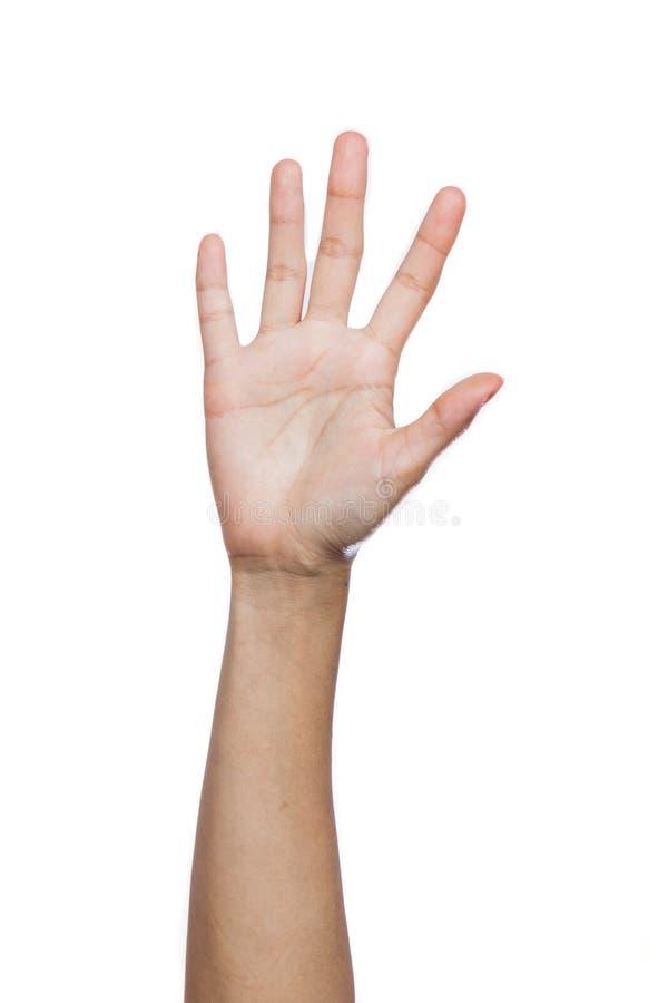 Menselijke hand vijf vingers stock fotografie