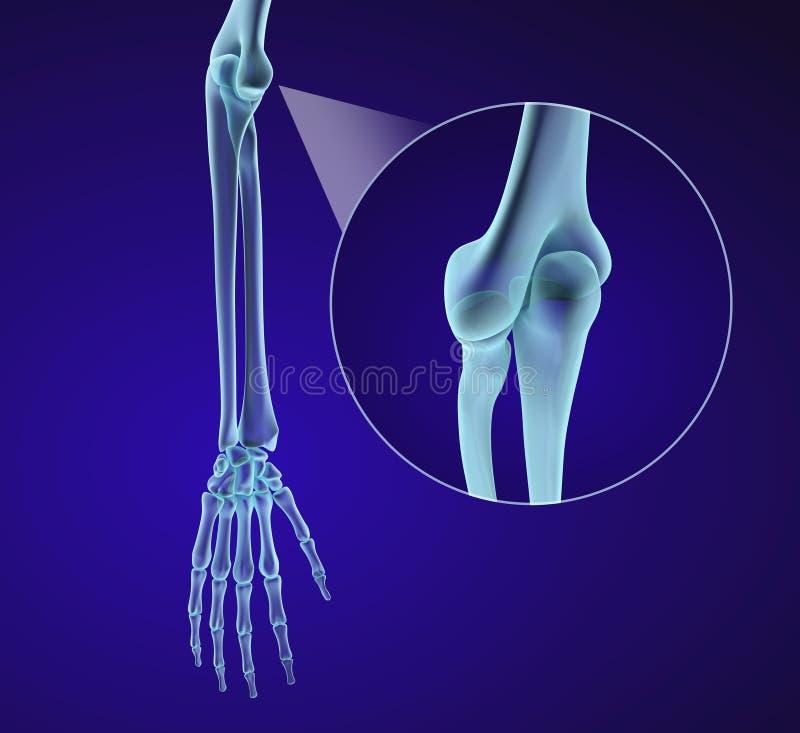 Menselijke Handanatomie Medisch nauwkeurig royalty-vrije illustratie