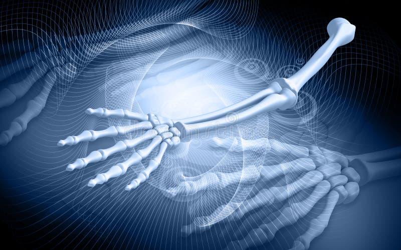 Menselijke handbeenderen royalty-vrije illustratie