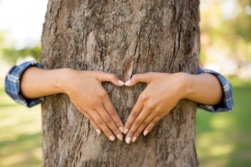 Menselijke handen die boom koesteren stock afbeeldingen