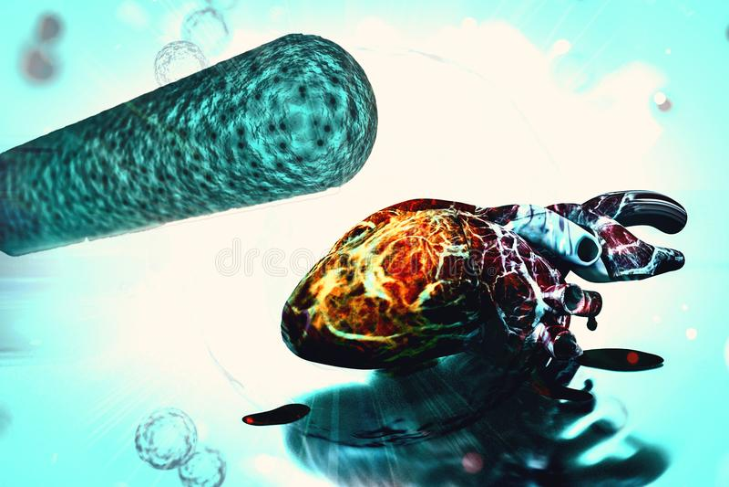 menselijke hart en van het bacteriënconcept van de hartgezondheid en behandeling hartbacterie royalty-vrije illustratie