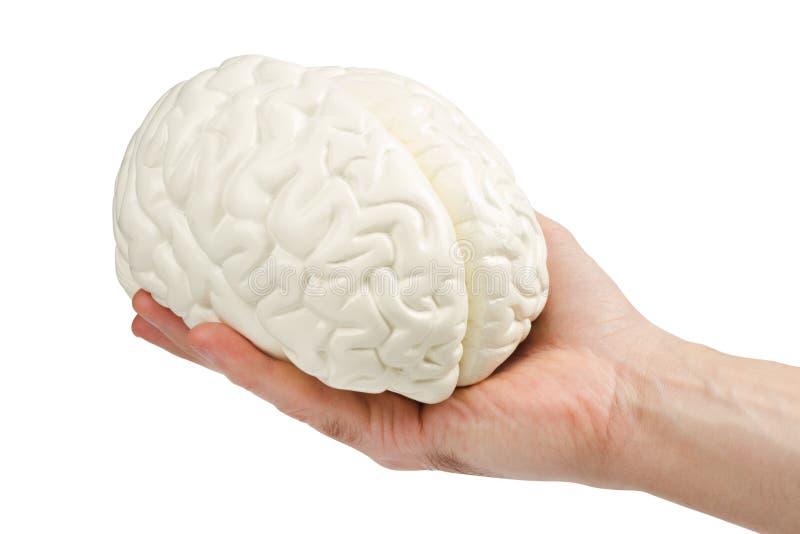 Menselijke hersenen royalty-vrije stock fotografie