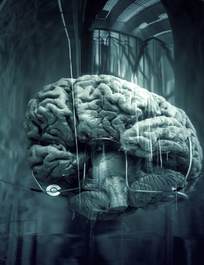 Menselijke hersenen in boot stock afbeelding