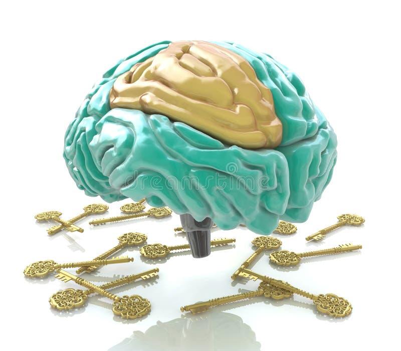 Menselijke hersenen en sleutels royalty-vrije illustratie