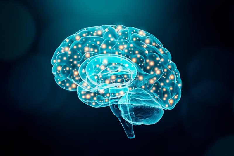 Menselijke hersenen Hersen of neuronenactiviteitenconcept Wetenschap, kennis, psychologie, geheugen conceptuele illustratie vector illustratie