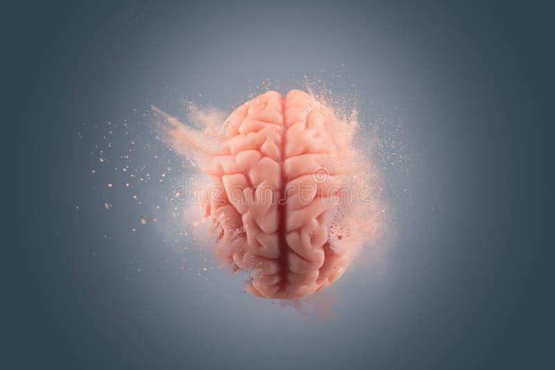 Menselijke hersenen op een grijze achtergrond stock fotografie